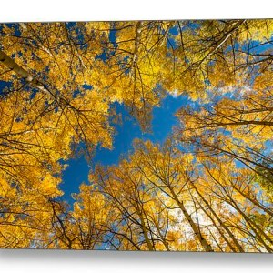 In The Middle Of It All Canvas Print
