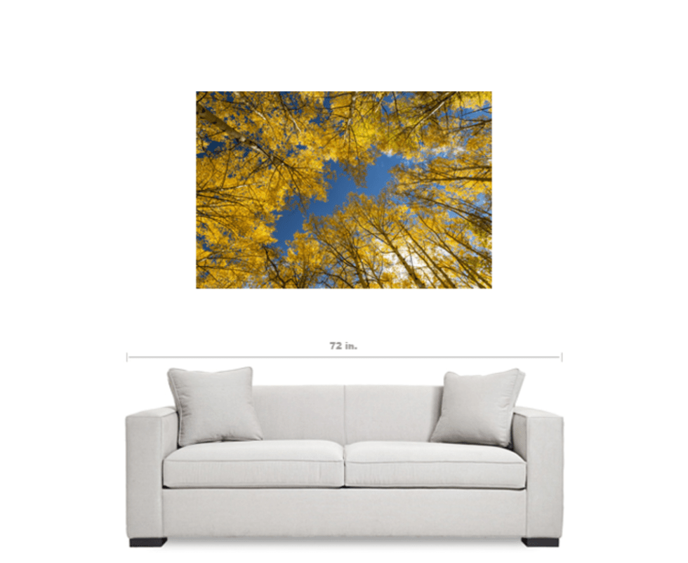 forest canvas art prints