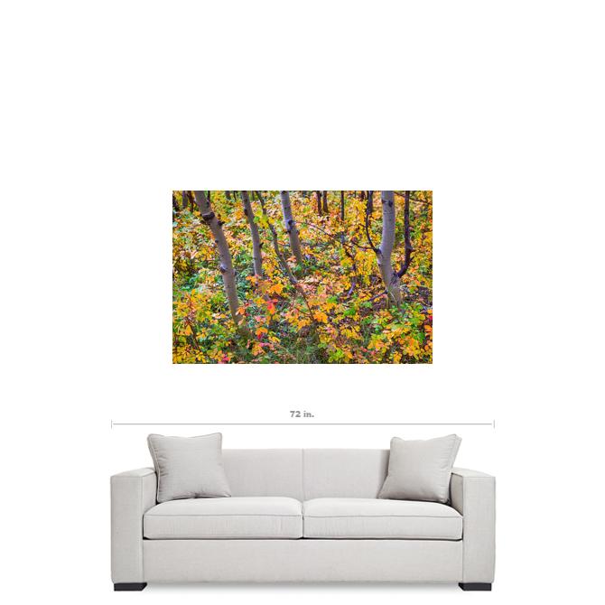 """Forest Colors 32""""x48""""x1.25"""" Premium Canvas Gallery Wrap Art"""