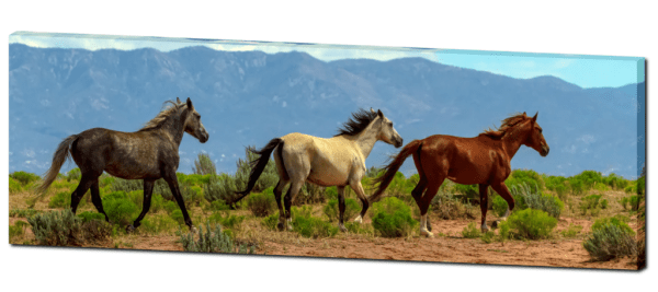 """Grey, White And Chestnut Wild Horses Panorama View 32""""x48""""x1.25"""" Premium Canvas Gallery Wrap"""