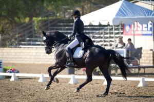 Sue Martin Dressage Clinic @ The Hillside Center |  |  |