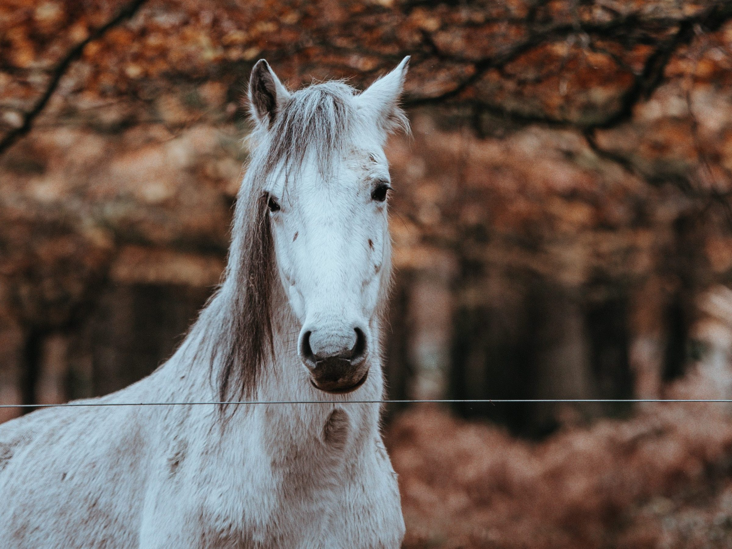 Horses without Halters in Turnout
