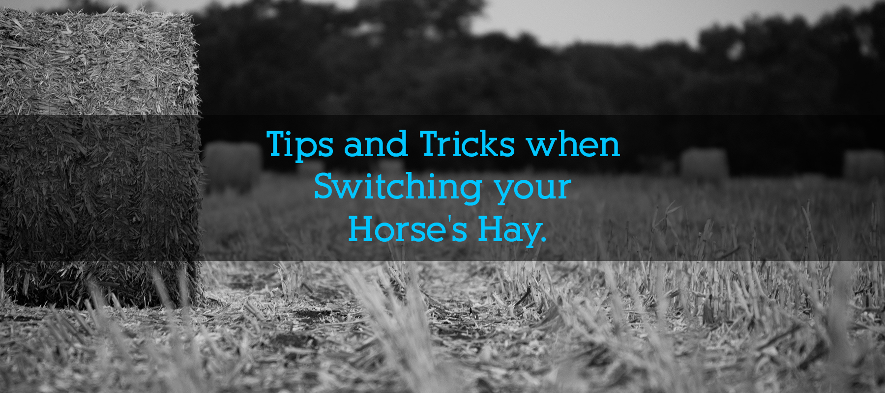 Tips and Tricks when Switching your Horse's Hay.