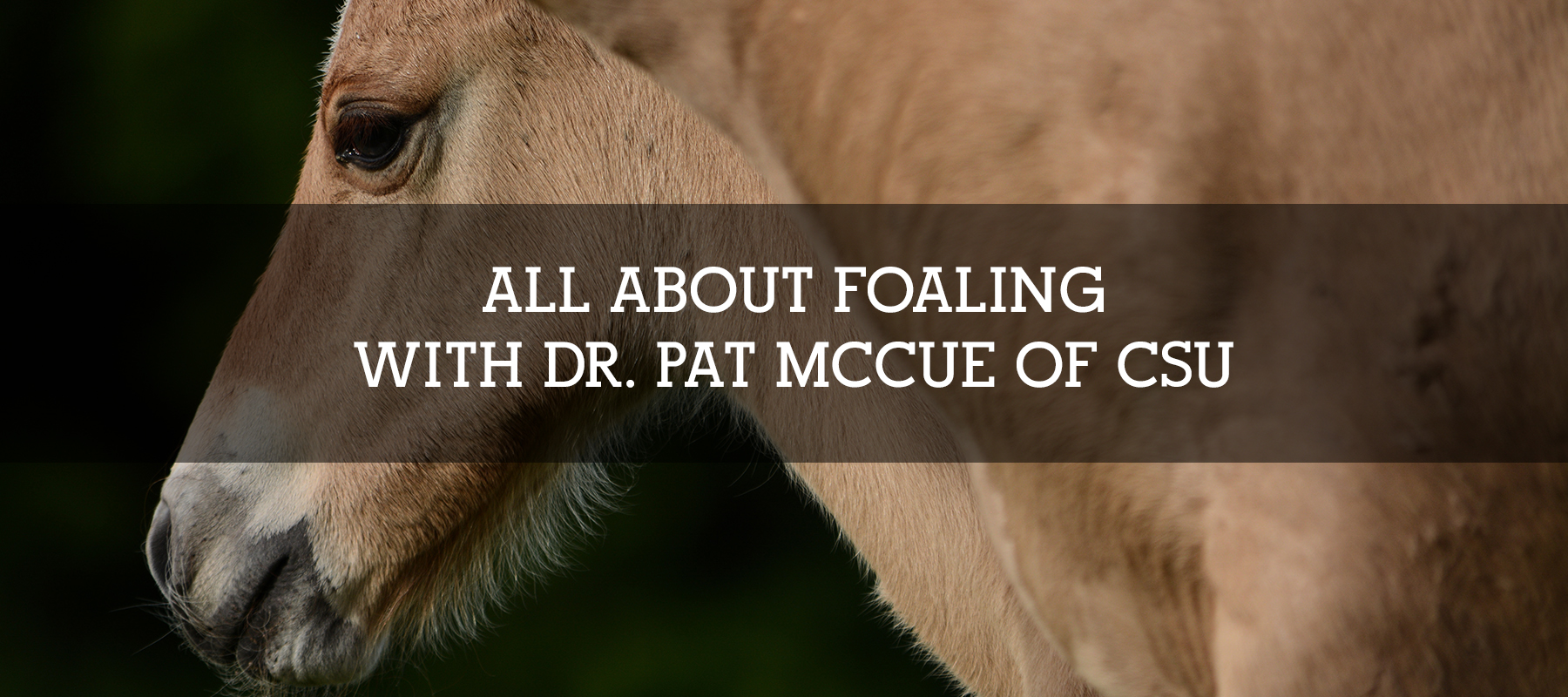 ALL ABOUT FOALING WITH DR. PAT MCCUE OF CSU