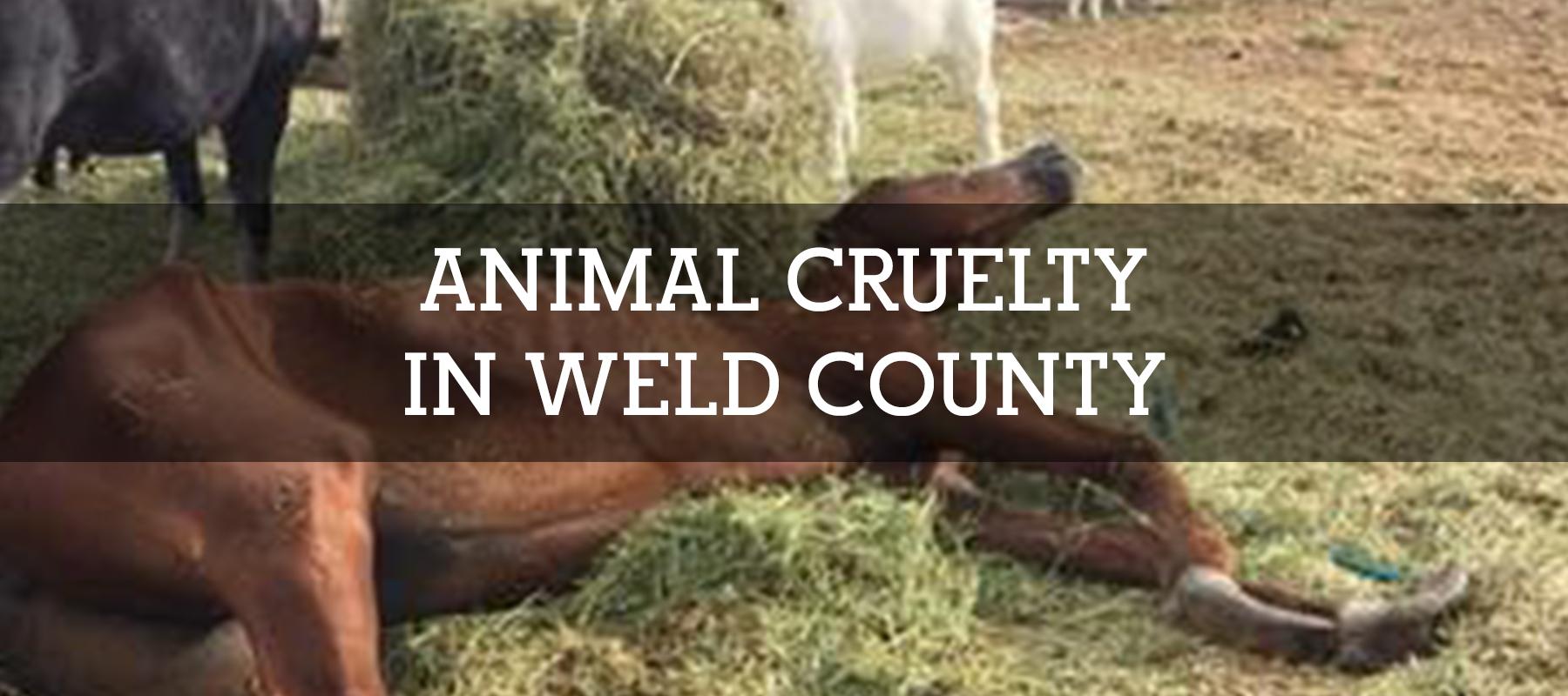 ANIMAL CRUELTY IN WELD COUNTY COLORADO