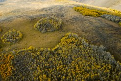 An aerial view of aspen groves in Eagle County reveals growth patterns that aren't visible from ground level.
