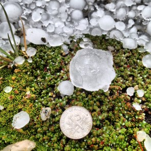Hail on moss along Mt. Evans Road, July 27, 2014.