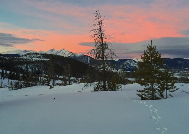 Critter tracks on Swan Mountain during a January sunrise.