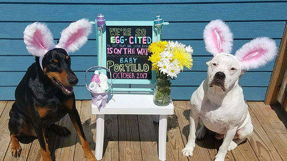 Easter Pregnancy Announcement Header
