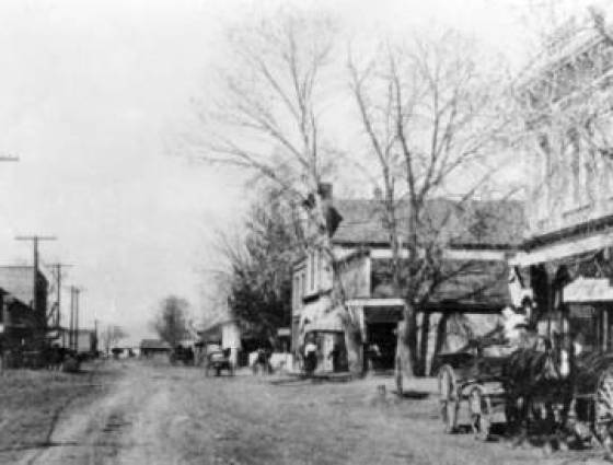 Arvada - Cottonwood tree lined Railroad Street (Grand View or Grandview Ave) includes horse-drawn wagons, Arvada Feed Store and telephone poles, 1900-1903
