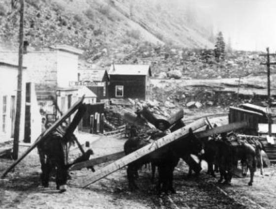 X-2211 Miners & burros loaded for days work, 1880s.