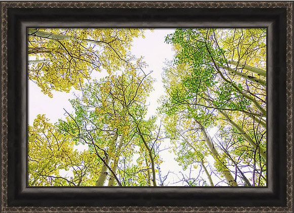 Autumn Turning Framed Print