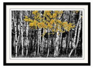 Aspen Touch Of Orange Framed Print