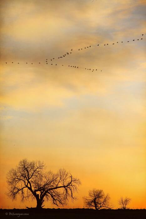 Three Trees Peace and Harmony Birds in V Art Prints