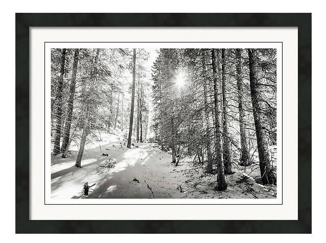 Winter Sunshine Forest Shades Of Gray Framed Art Print