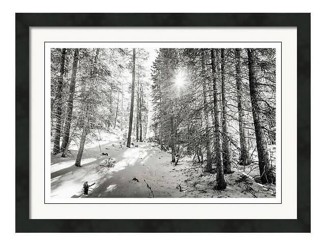 Winter Sunshine Forest Shades Of Gray Framed Art Print