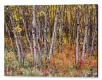 Wonderful Woods Wonderland Acrylic Print