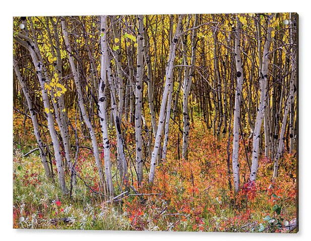 Colorful Woods Wonderland Acrylic Nature Art
