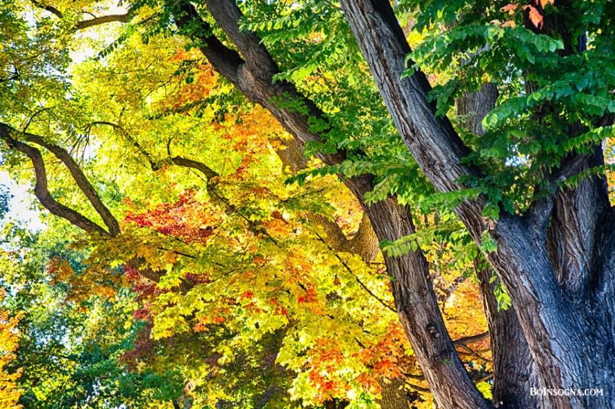 Season Leaves of Glory Art Prints