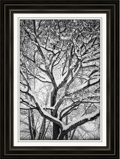 Snowy Trees Winter Intertwine framed prints