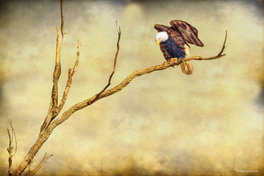 American Freedom Art Prints and Stock Images