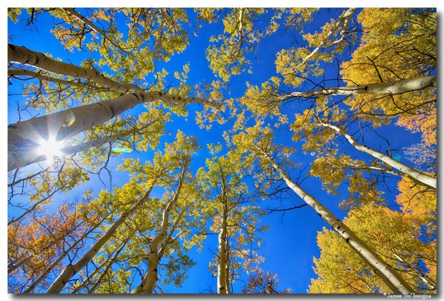 Autumn Aspen Magic Art
