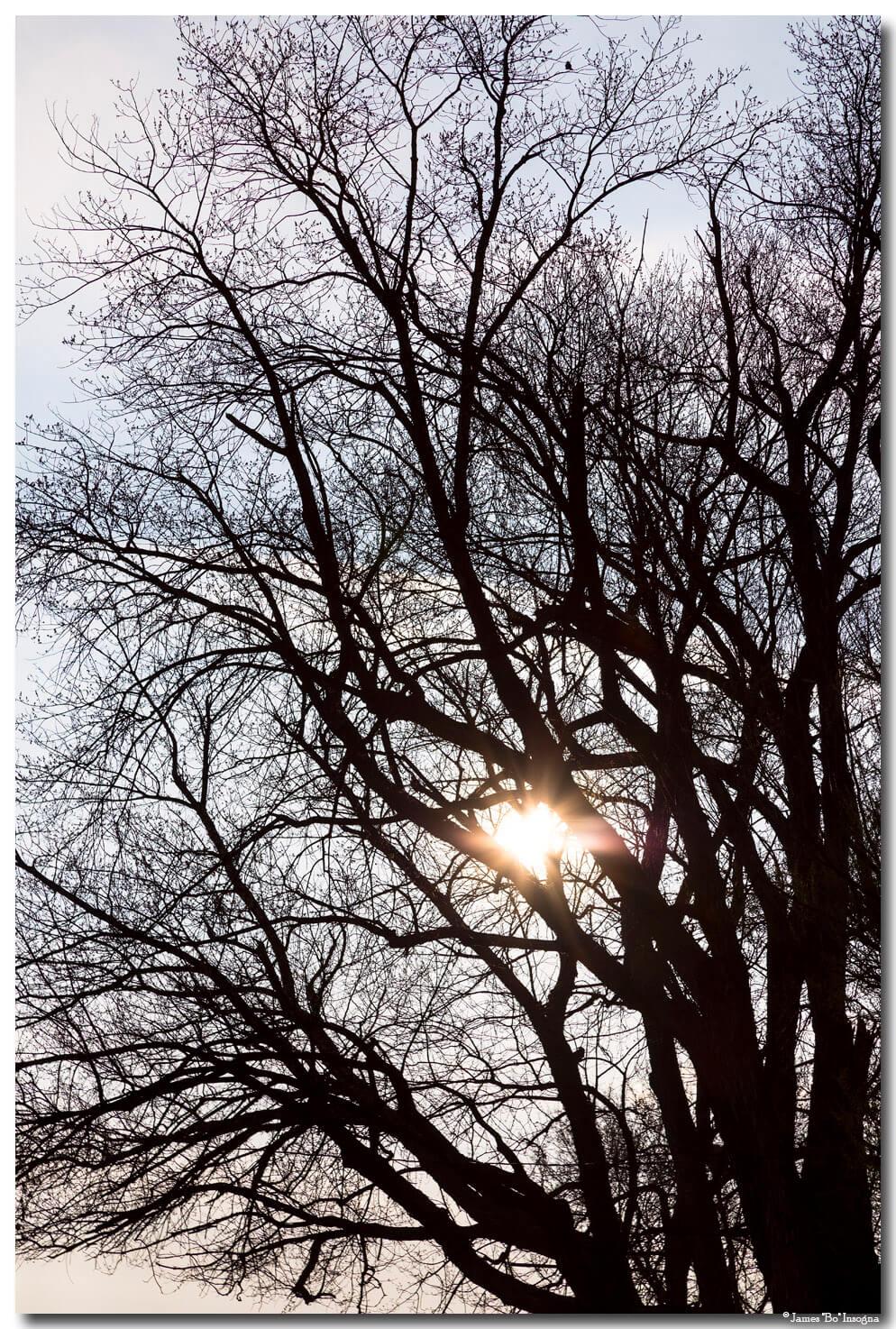 I love Trees – Tree With a Heart