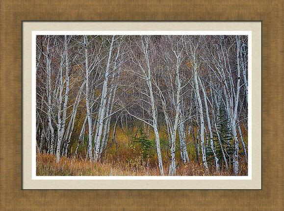 Walk In The Woods Framed Print
