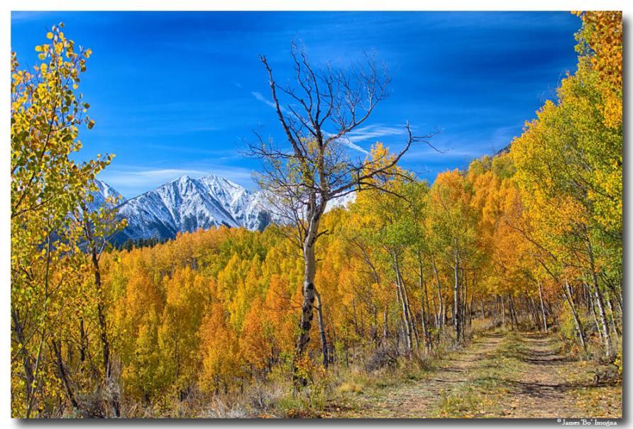 Colorado Fall Foliage Back Country View Photography Art Prints