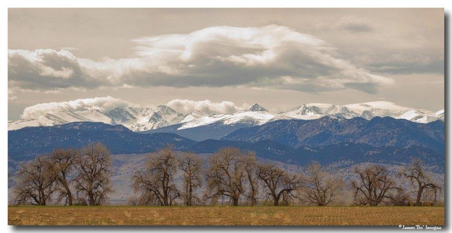 Cottonwood Trees Rocky Mountain View Art Prints
