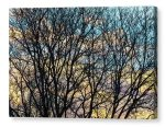 Tree Branches And Colorful Clouds Canvas Print