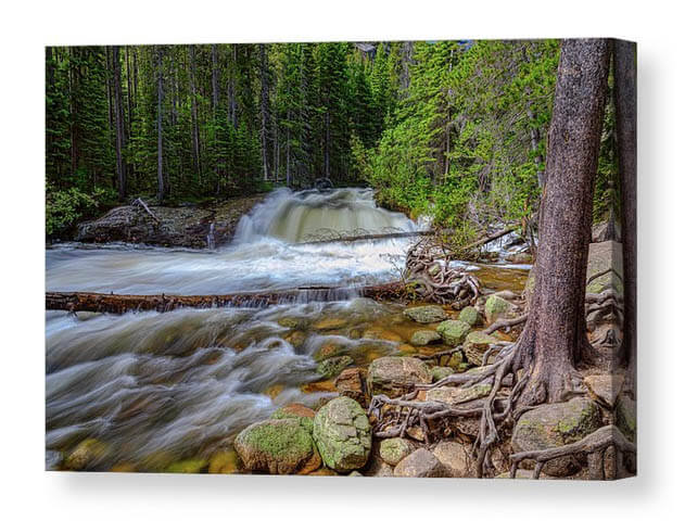 Romantic Forest Stream Canvas Print