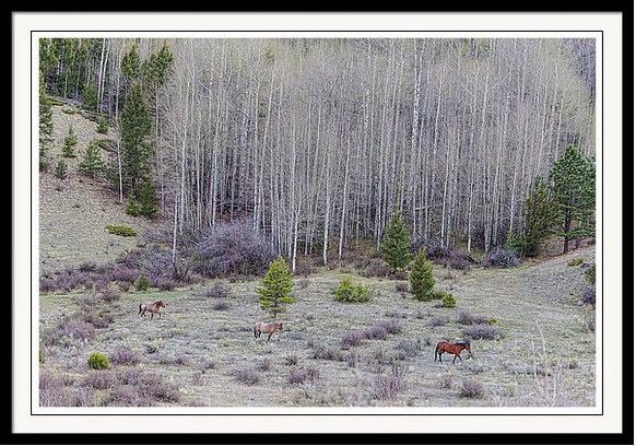 Three Horse Harmony Framed Print