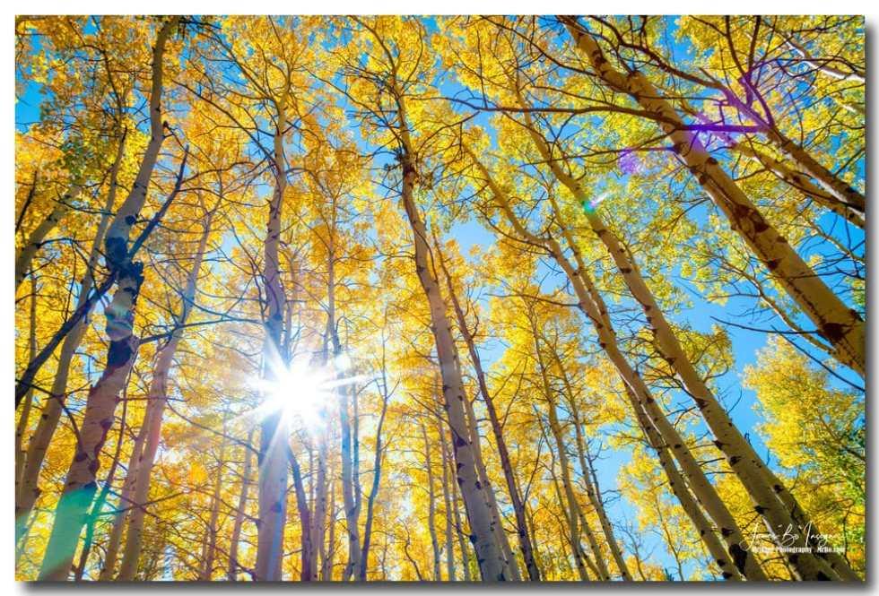 Colorado Autumn Sunshine Art Print
