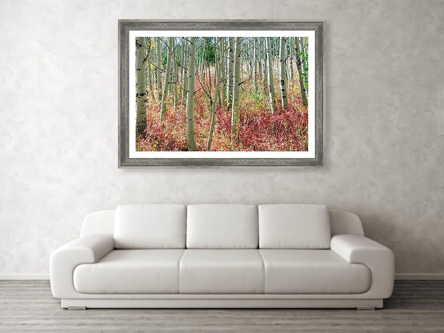 Aspen Tree Trunks And Burning Reds Framed Print