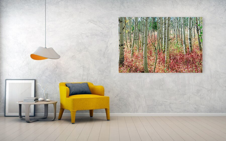 Aspen Tree Trunks And Burning Reds Acrylic Print