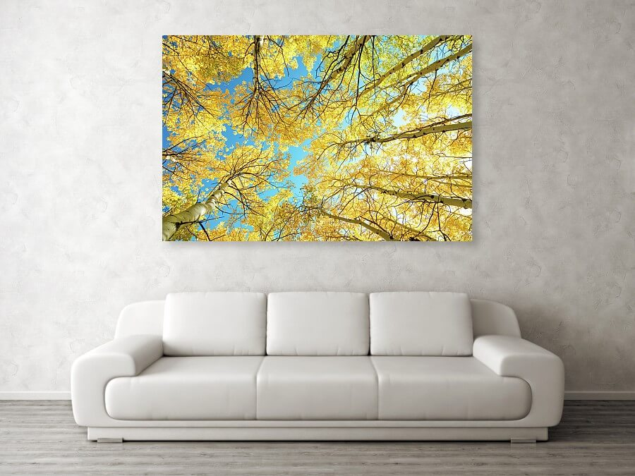 Colorado Aspen Forest Kaleidoscope Art Print