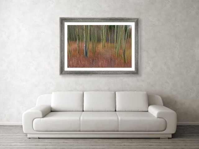 Soothing Wilderness Wonder Framed Print