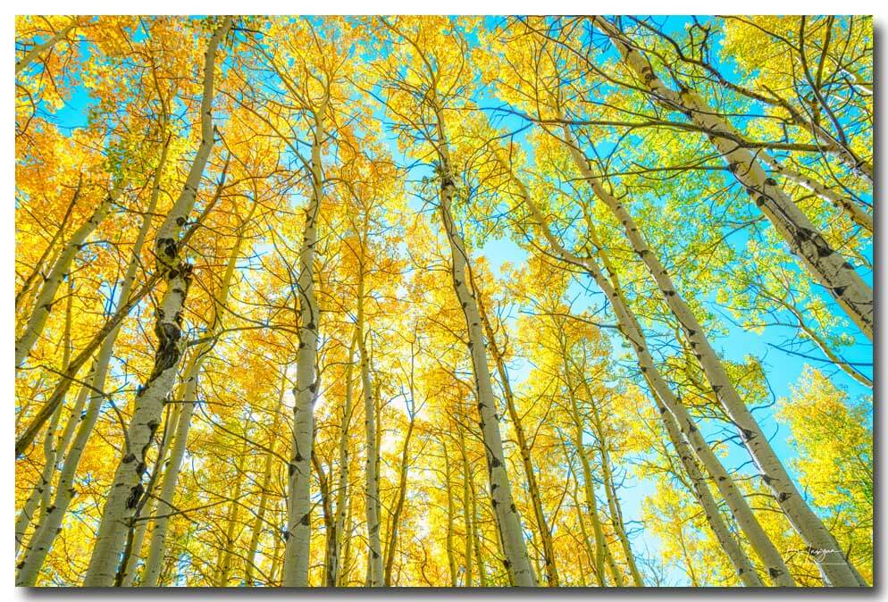 Beautiful Fall Day In The Woods Art Print
