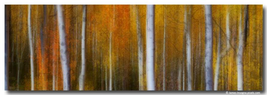 Forest Color Burst Modern Abstract 72x24 fine art print