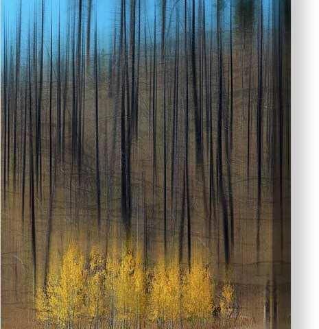 Aspen Forest Burnout Abstract Art Canvas Print