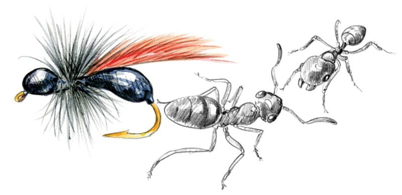 Terrestrial or flying ants. copyright Marjorie Leggit