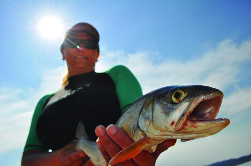 Lake trout close-up