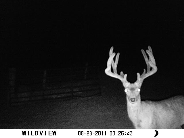 Mule deer buck in Yuma County.