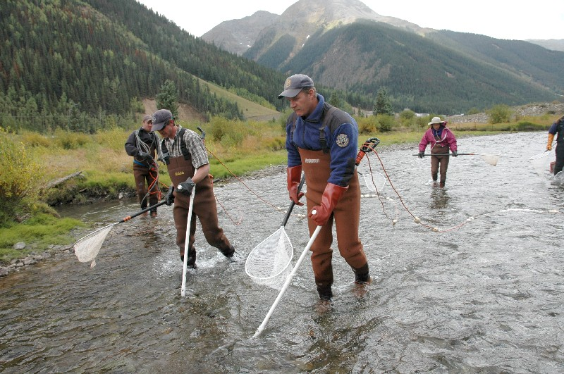 biologists conduct fish-population surveys on a river
