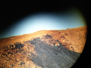 Rams on ridge through spotting scope.