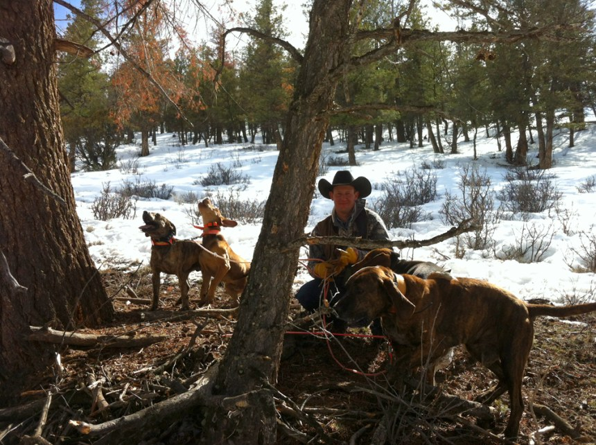 Expert houndsman Clayton Wilson with his team of dogs.