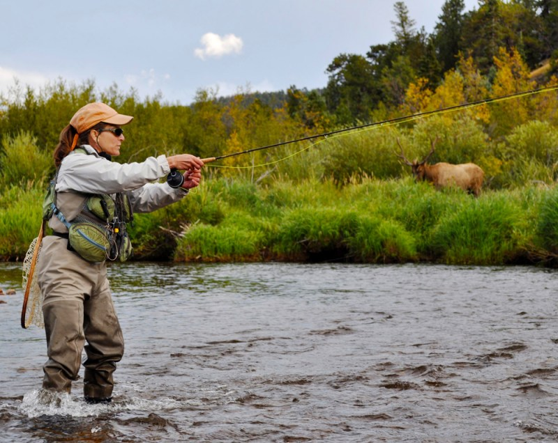 Angler and a bull elk share a stream in RMNP