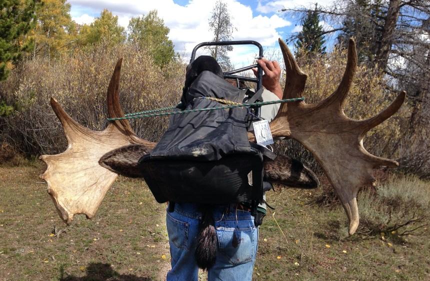 JasonNicolas moose 3