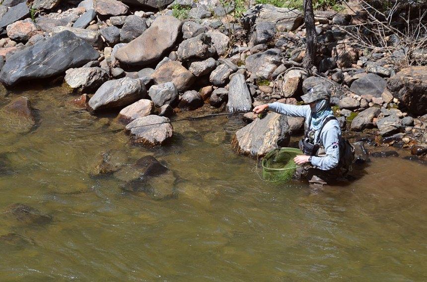 Blog-Fly-Fishing-Clear-Creek-8-8-2014-Wayne-D.-Lewis-DSC_0268